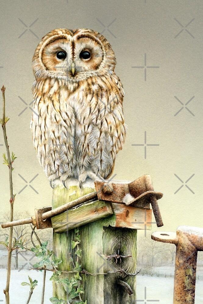 Tawny owl in the snow by Sarah Trett