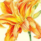 Double Daylily Hemerocallis orange watercolor by Sarah Trett