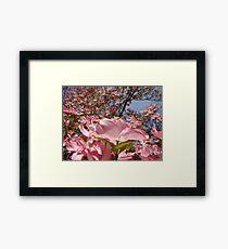 Beautiful Spring Fine Art Photography Pink Dogwood Flowers Framed Print