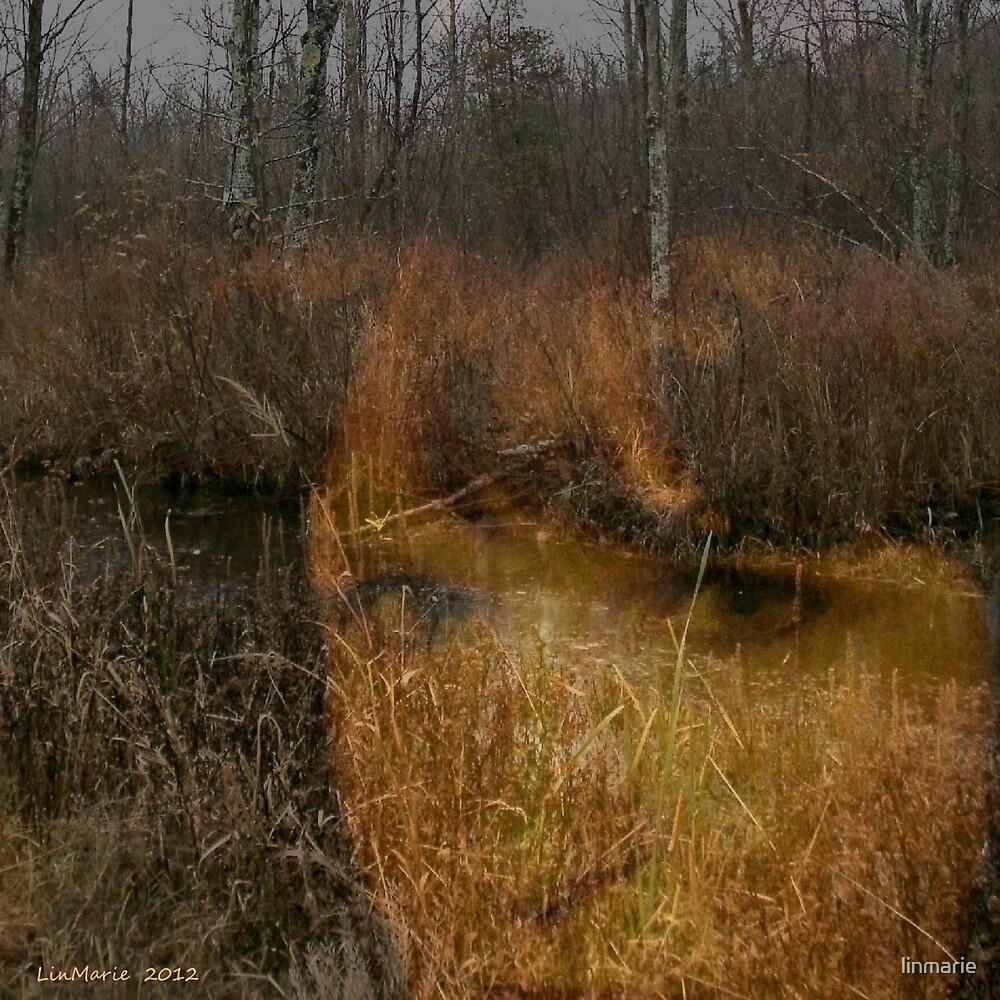 The Seeker.... by linmarie