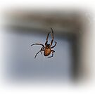 The Spider In Front Of The Window by Jonice