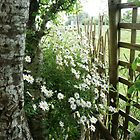 over the garden fence by Anna  Goodhind