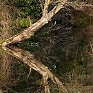 Leaning tree reflection by Gary Rayner