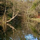 River like a mirror by Gary Rayner