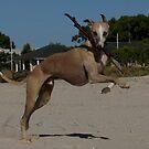 kickin back on the beach by chloemay