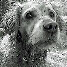Dirty dog by Arianey