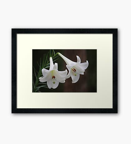 Wild Lilies Growing In The Bush Framed Print