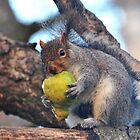 What Pear? by Dorothy Thomson