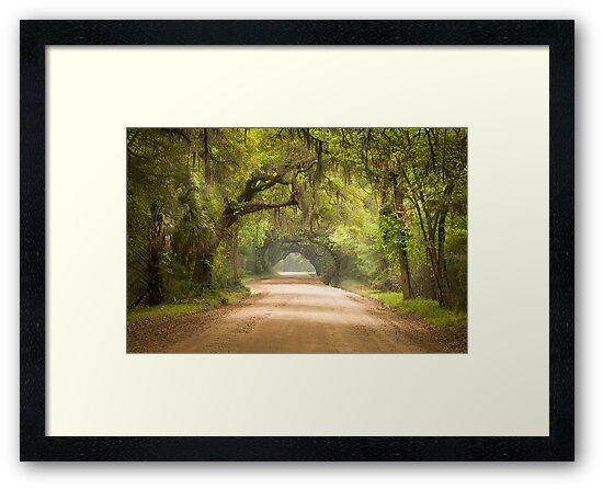 Charleston SC Edisto Island Dirt Road - The Deep South by Dave Allen