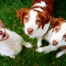 Tilly, Chazer and Bella by Helen Green