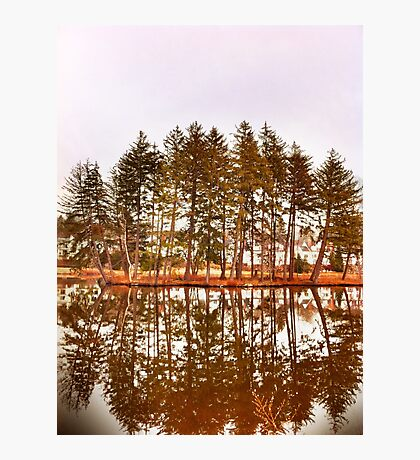 Mirror Images Of Trees Photographic Print