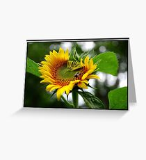 Limpid Sunflower with Bee Greeting Card