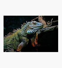 Sleepy Dinosaur Photographic Print
