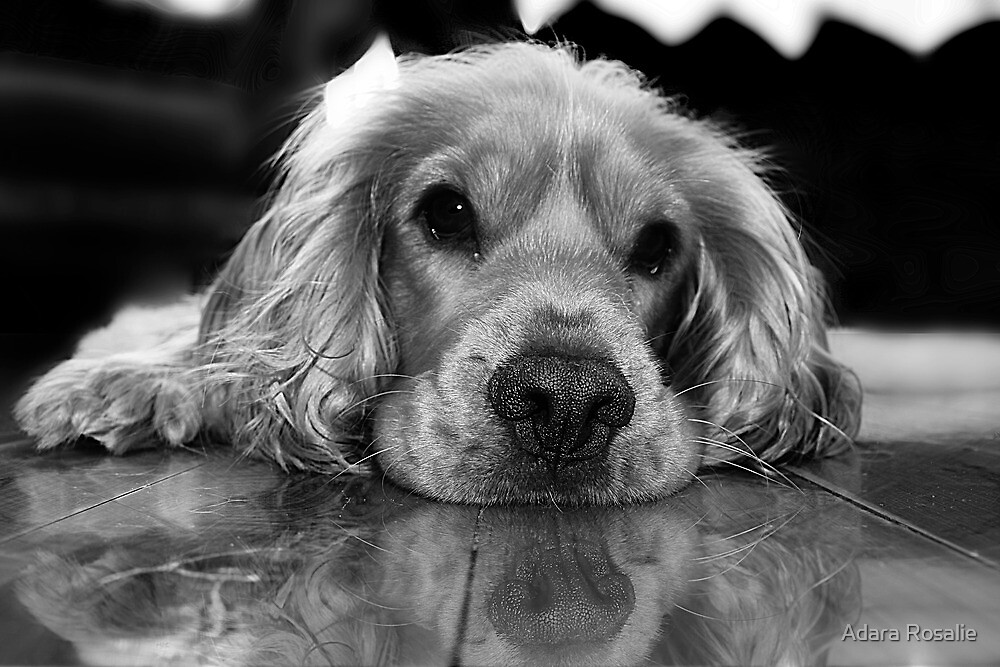 Why so sad? by Adara Rosalie