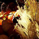 October Harvest ~ A Still Life by shutterbug2010
