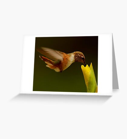 SUMMER*HUMMER Greeting Card