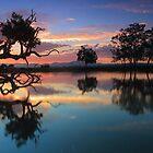 Moruya .Home of the black swan by Donovan Wilson