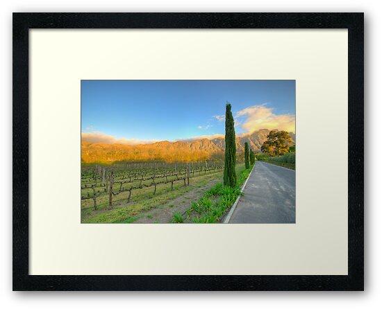 Franschhoek Vineyard, South Africa by David  Phillips