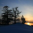 """   Mother White Pine  "" by fortner"