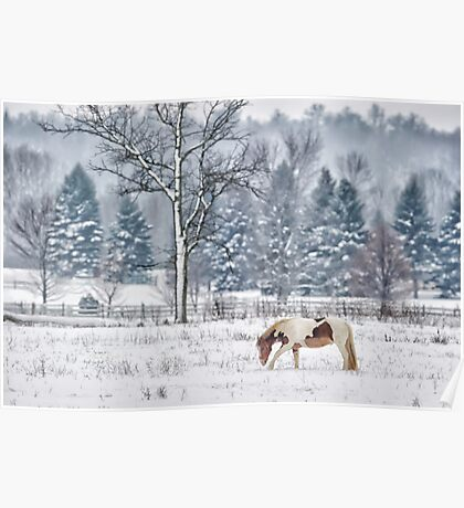 Winter grazing Poster