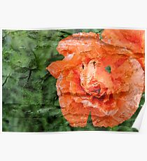 Bark layer Poppy Poster