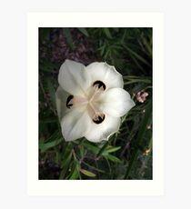 Spotted White Flower Art Print