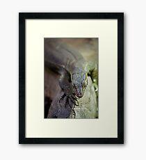 up close lizard! Framed Print