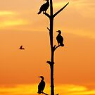 Cormorants Sunset by ArtThatSmiles