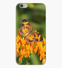 Pearl Crescent on Butterfly Weed Flowers 1 iPhone Case