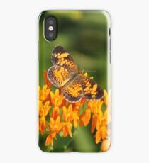 Pearl Crescent on Butterfly Weed Flowers 1 iPhone Case/Skin