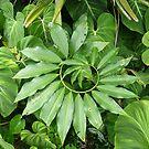 Circle of Leaf by Matt Hill