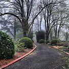 Nooroo Gardens Mt Wilson NSW Australia by Bev Woodman