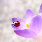Forecasting spring... by Yool