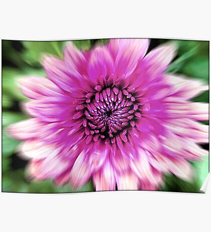Flower in Motion © Poster