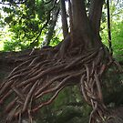 Painted Roots by Heather Crough