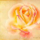 Romance by Laura Palazzolo