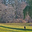 Wild Geese ! Chasing a Dream! by mikepaulhamus