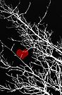 Cold Air Is Reaching For My Heart by Denise Abé
