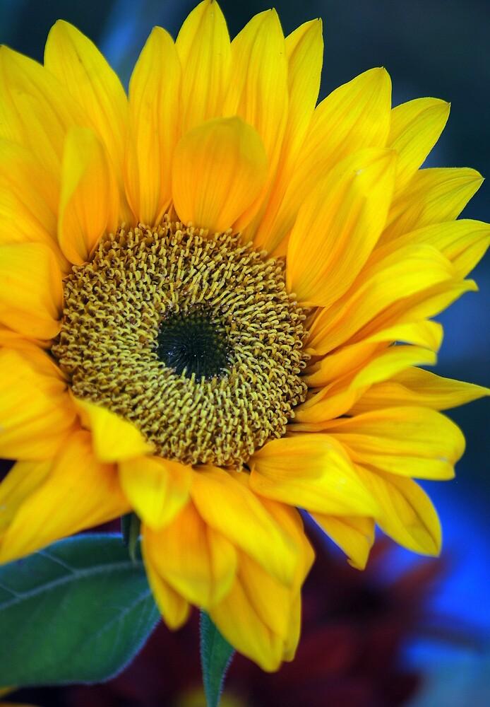 Grabber yellow by Rob  Stanard