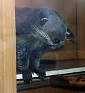 The binturong's corner by Anthony Brewer