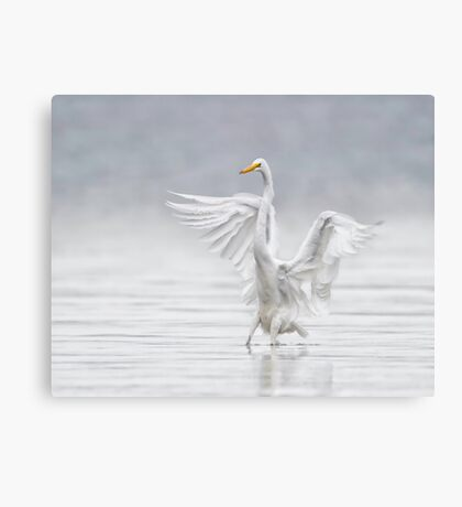 Landing in the Fog Canvas Print