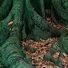 Many Faces of Tree by Sandra Chung