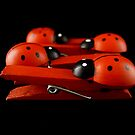 LADYBUGS by Barbara Morrison