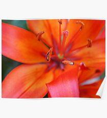 Orange Blossom Poster