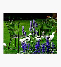 Relax In The Garden Photographic Print