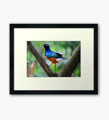 So what if my pants don't match? Framed Print