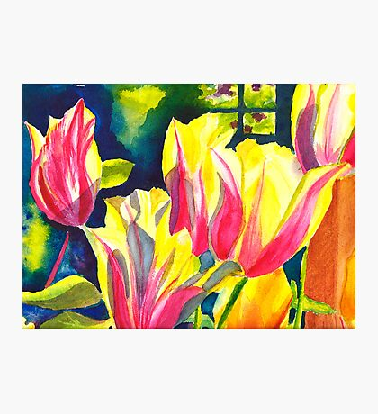 Tulip Parade Photographic Print