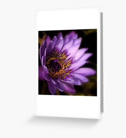 The World Is A Colorful Wonder ~ Part Thirty-Seven Greeting Card