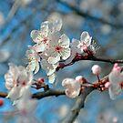 Botanical Blossoms by Martina Fagan