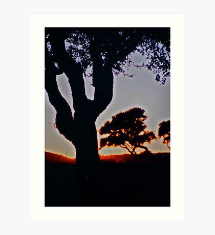 Olive tree sunset .Sardinia. Bella Italia. by Brown Sugar. Art Print